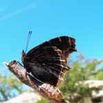 photography_butterflysticksky_508x381
